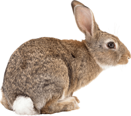 brown-rabbit-sideview.png